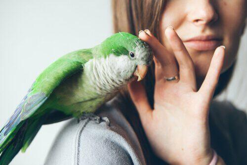 Parasiten bei Vögeln: Behandlung und Vorbeugung
