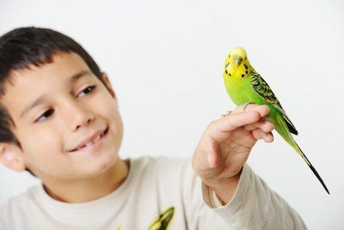 Parasiten bei Vögeln: Tipps zur Pflege