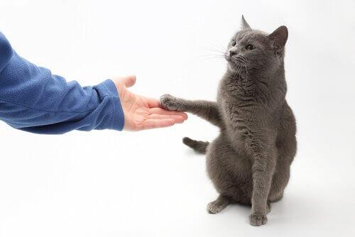 Können Katzen das Pfötchengeben lernen?