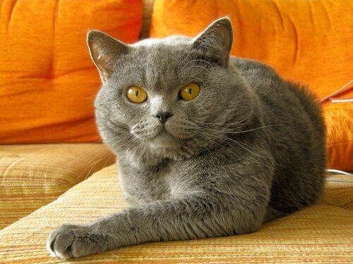 Wie man schlechtes Verhalten bei Katzen verbessert