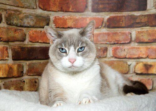 Senile Demenz bei Katzen