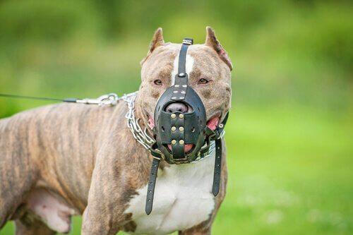Ist eine Hundehaftpflichtversicherung notwendig?
