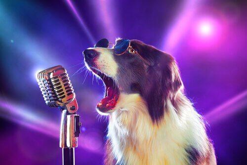 8 Songs über Hunde, die dir gefallen werden