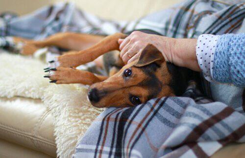 Symptome von Hundestaupe