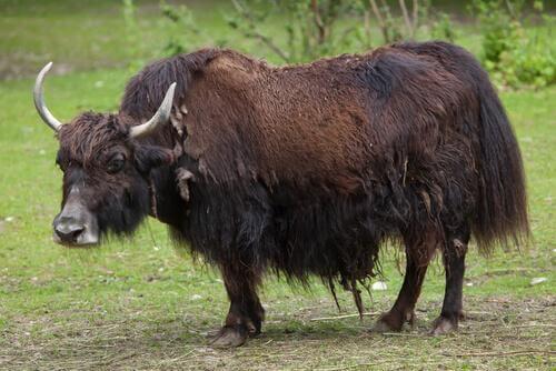 5 Tiere aus China - kennst du sie schon?