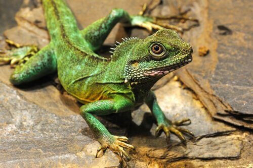 Tiere im Feng Shui, grüner Drache