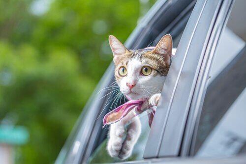 Tipps für die Autofahrt