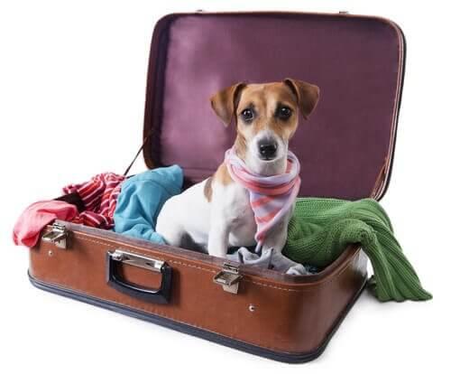 Urlaub mit Hund: Hund sitzt im Koffer