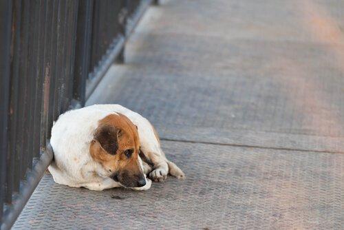 Verlust eines Haustieres: wie finde ich meinen Vierbeiner wieder?
