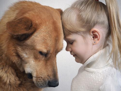 Verstehen Hunde den menschlichen Gesichtsausdruck?