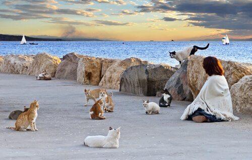 Warum müssen Katzenkolonien kontrolliert werden?