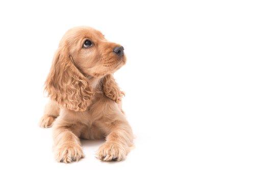 Welpenerziehung, damit dich dein Hund von klein auf respektiert