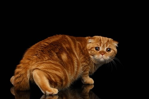 Ängstliche-Katze