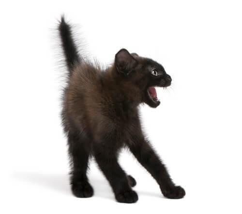 Körpersprache: ängstliches Kätzchen