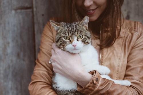 Schwangerschaft-und-Katzen - Toxoplasmose