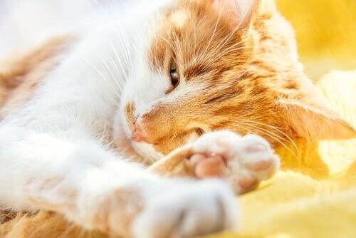 Altersdemenz bei Katzen: Symptome und Behandlung