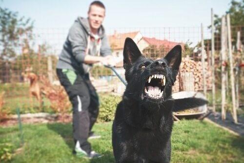 Können Hunde Angst wahrnehmen?