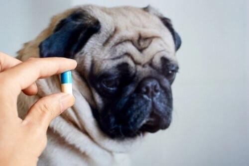 Ist es gut, deinem Haustier Antibiotika zu geben?