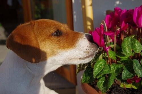Hundehütte - Hund riecht an Blume