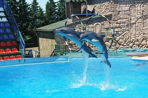 Delphinarium – Freiheit oder Gefängnis?