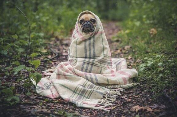 Grippe bei Hunden: Prävention und Pflege