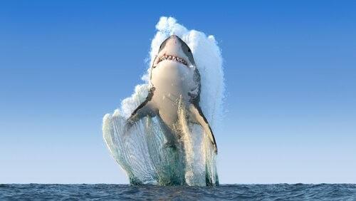 Wann Haie Menschen angreifen