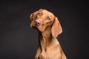 Hautgesundheit von Hunden: Welchen Einfluss hat die Ernährung?