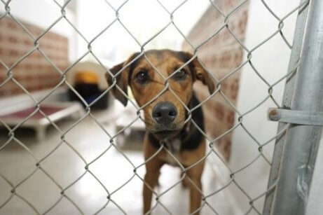 Adoption eines Hundes aus dem Tierheim