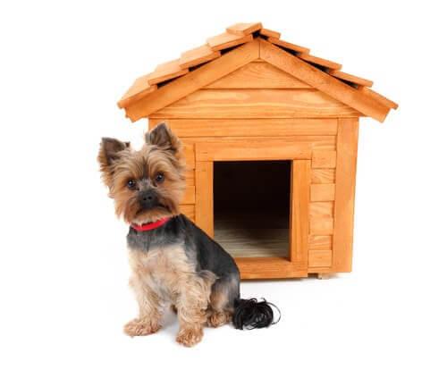 Hundehütte - kleiner Hund