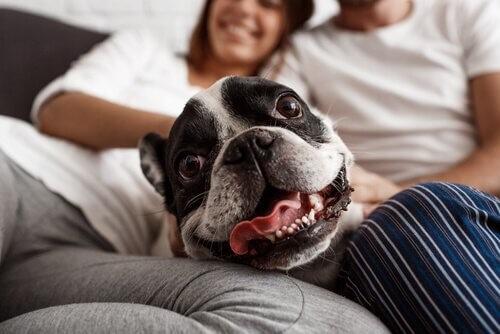 Hund-Sofa