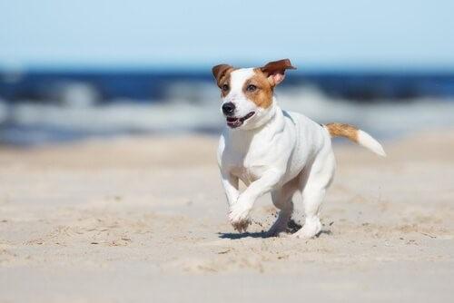 Den Sommer mit deinem Hund genießen - am Strand