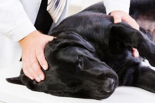Hund-Tierarzt