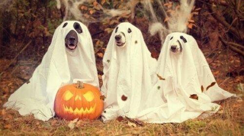 6 Hundekrankheiten, die im Herbst häufiger auftreten
