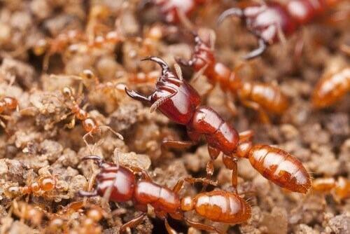 Die tödlichsten Insekten der Welt