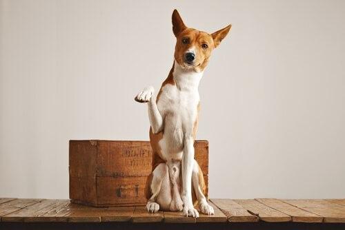 Hundetoilette: Wie kannst du deinen Hund daran gewöhnen?