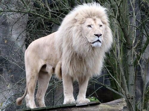 5 wilde Tiere, die du noch nie gesehen hast