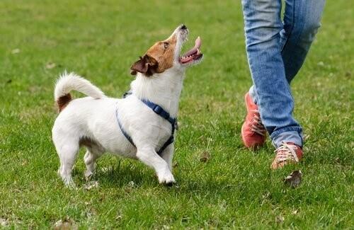 Lebensqualität von Hunden verbessern: 5 Möglichkeiten