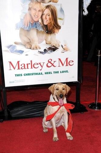 Marley-Ich
