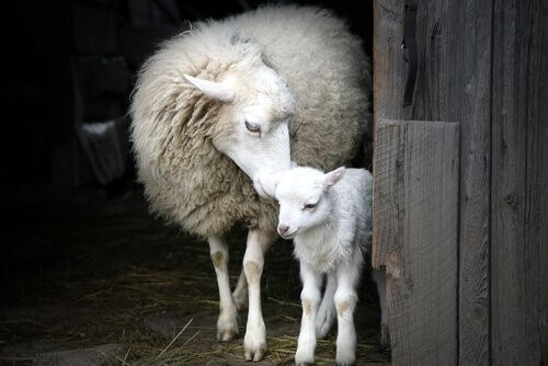 Der beeindruckende Mutterinstinkt von Tieren