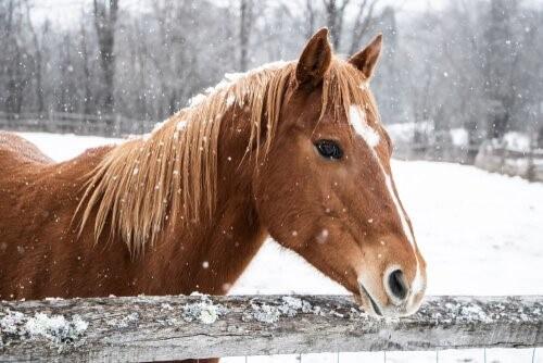 Wie du dein Pferd im Winter versorgst