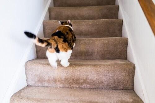 Warum rennt meine Katze wie verrückt durch das Haus?