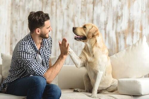 Vorteile eines Haustiers für Singles
