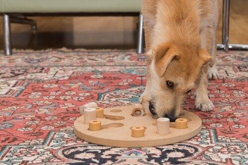 Intelligenztests - Hunde