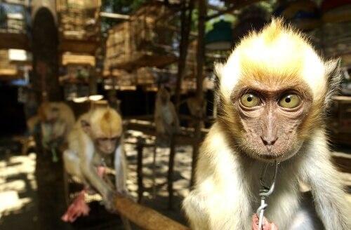 Spanien, das Tor zum illegalen Tierhandel in Europa
