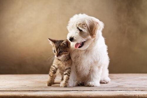 Unterschiede zwischen Hunden und Katzen