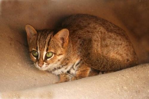Wildkatzen, die du vermutlich noch nie gesehen hast