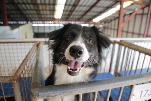 Adoption eines ausgesetzten Hundes: Was du berücksichtigen solltest
