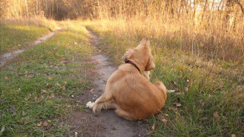 Allergien bei Hunden: Auslöser und Symptome