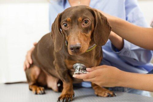 Tipps zur Haltung von Haustieren