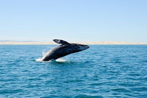 Ausgestorbene Wale an der Küste Spaniens entdeckt